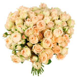 Розы Пионовидные бережвые